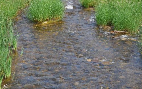 Речка Пасха