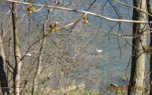 Городищенское озеро. Изборск