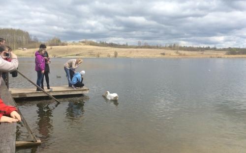 Лебединым озером называют Городищенское озеро в миру