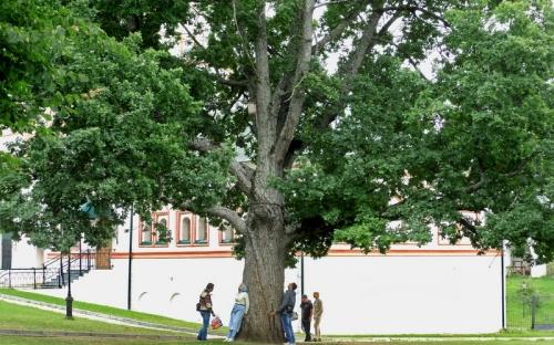 Знаменитый дуб Иверского монастыря