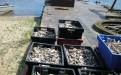 Местное население живет уловом рыбы
